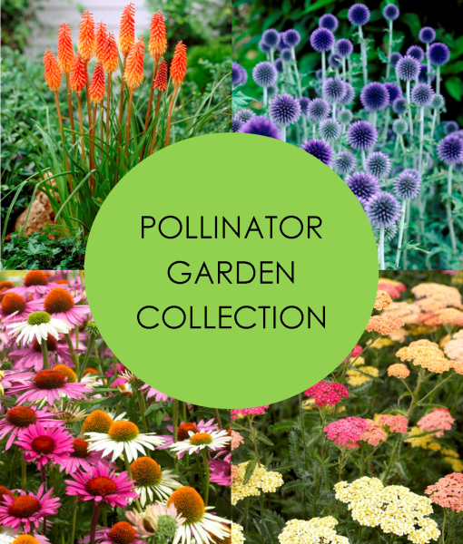 POLLINATOR-COLLECTION-NEW-4